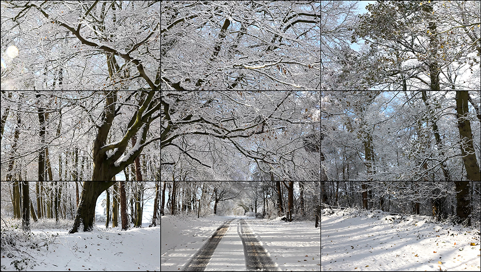 Image of Woldgate Woods, Winter, 2010