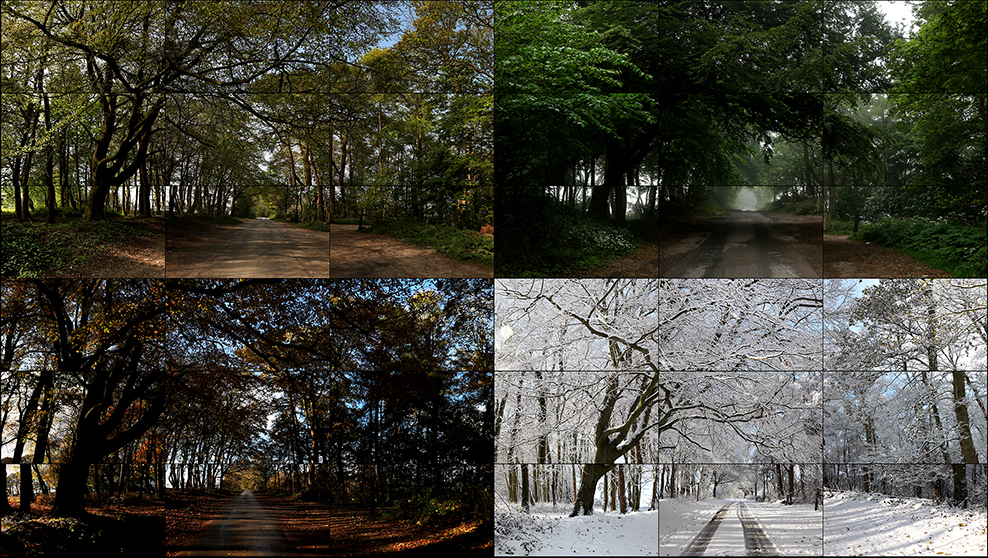 Image of The Four Seasons, Woldgate Woods (Spring 2011, Summer 2010, Autumn 2010, Winter 2010)
