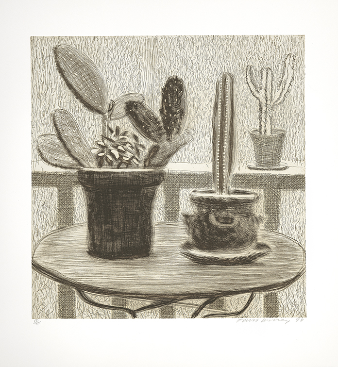 Image of Cacti on Terrace