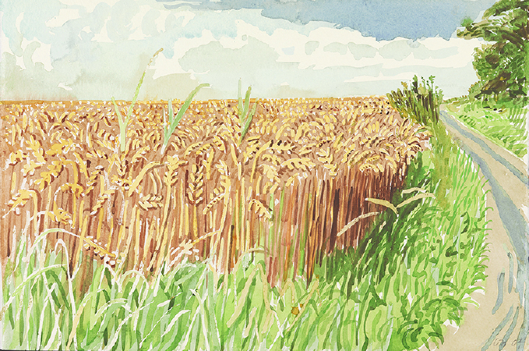 "Image of Ripe Corn on the Roman Road. East Yorkshire from ""Midsummer: East Yorkshire"""